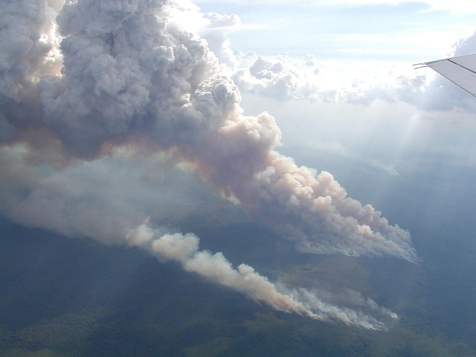 Les plus gros arbres sont abattus mais le reste est brûlé pour laisser place à l'agriculture