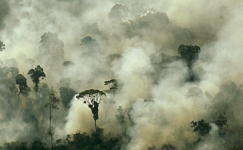 Pour vous donner une idée, la déforestation, c'est l'équivalent d'un terrain de foot, toutes les 2 secondes.