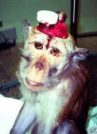 Les scientifiques découvrent que le singe a un cerveau, par contre pour eux j'ai comme un doute...