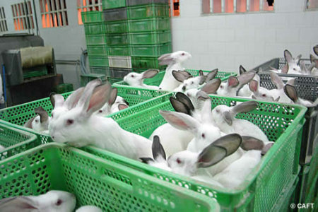 La fourrure de lapin