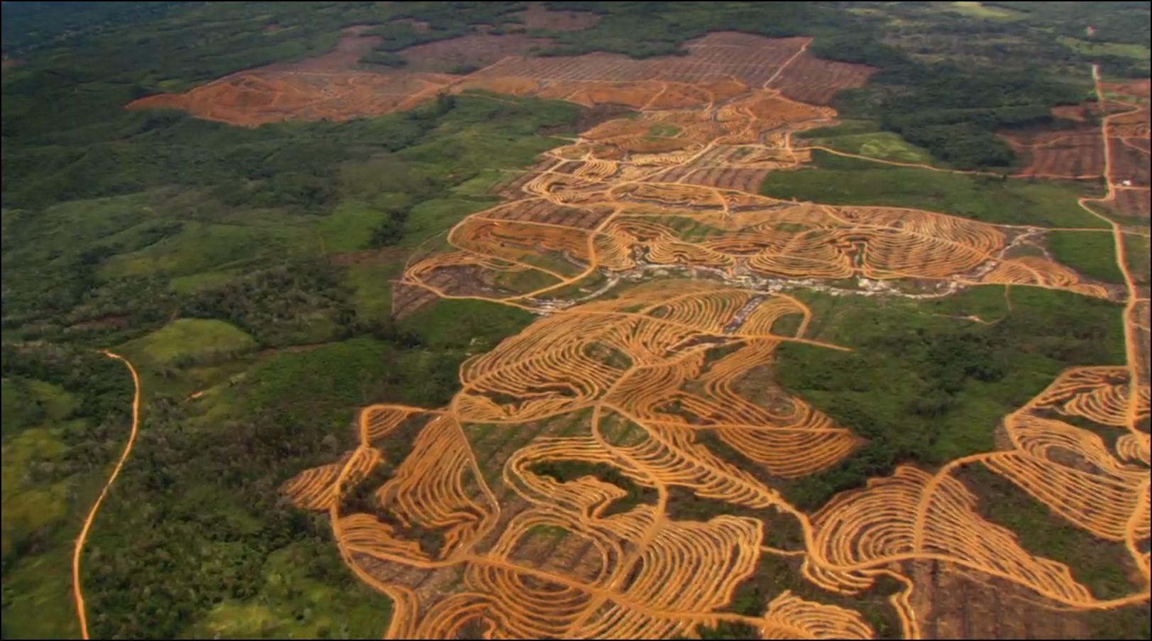Les forêts tropicales abritent jusqu'à 90% de toutes les espèces terrestres.
