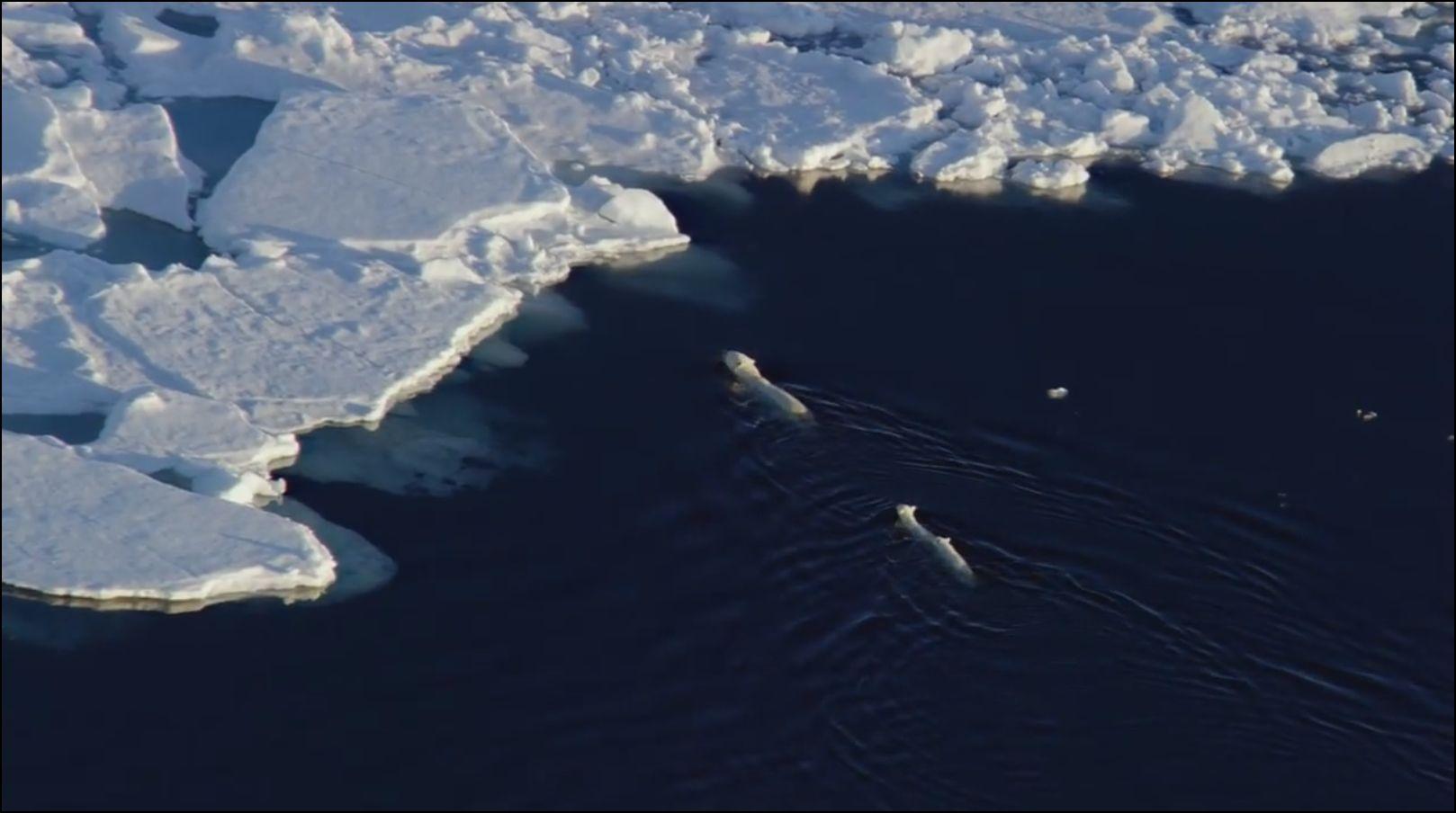 97% de l?eau sur la planète est salée