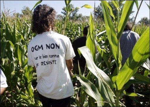 NON, aux OGM de merde !!