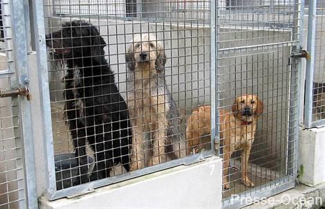 Dans les refuges, les animaux non-adoptés seront euthanasiés.