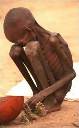 La Fao tire la sonnette d'alarme   De nombreux pays confrontés à des pénuries alimentaires