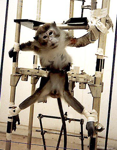 Cyberaction contre les tests de cosmétiques sur les animaux
